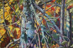 Anita-Williams-lichens