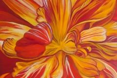anitawilliams-begonia
